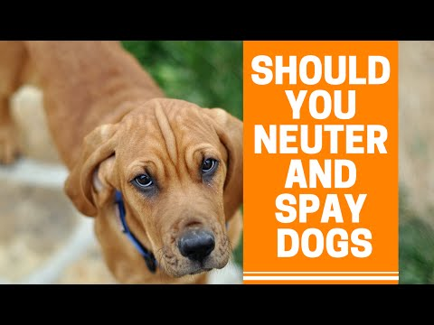 Should you neuter or spay your dog or puppy? the truth vets don't tell you!