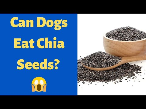 Can dogs eat chia seeds? is chia seeds safe for dogs?