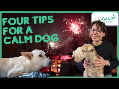 How to keep your dog calm on fireworks night 2020 - four tips