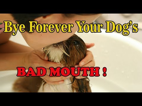 How to get rid of dog's bad mouth | stop dog's bad breath home remedy