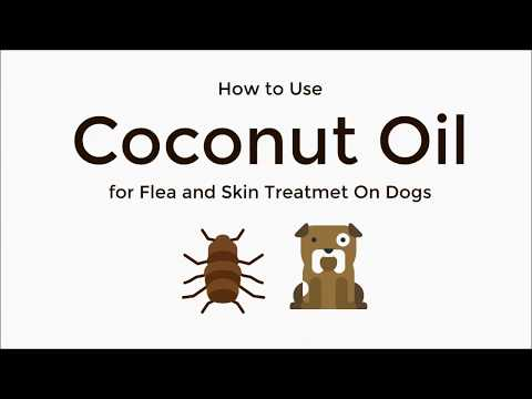 Coconut oil for flea and skin treatment on dogs