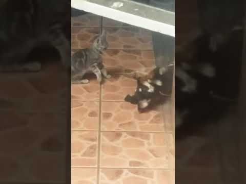 Who said cats and dogs don't get along