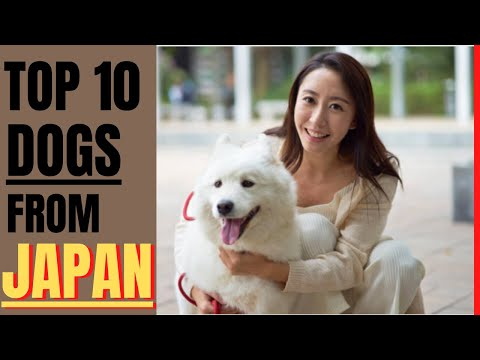 Top 10 dog breeds from japan