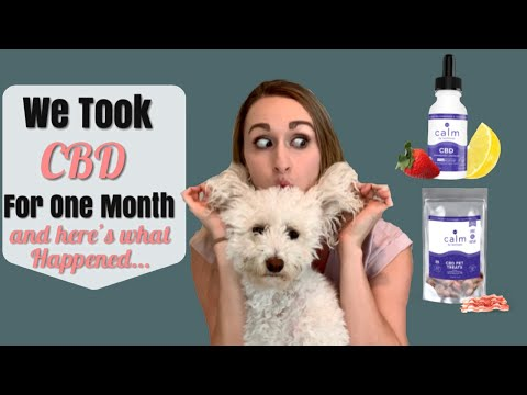 The benefits of cbd oil for anxiety!   best cbd for dogs