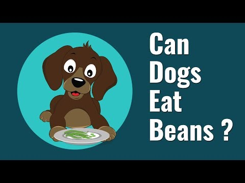 Can dogs eat beans?