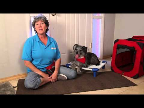 How to stop an old dog from urinating on the rug : dog training & basic obedience