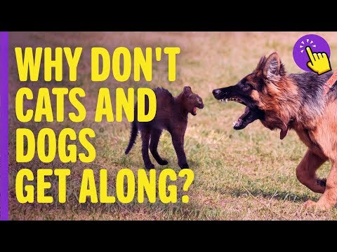 Why don't cats and dogs get along?   interesting to know   keep it in mind