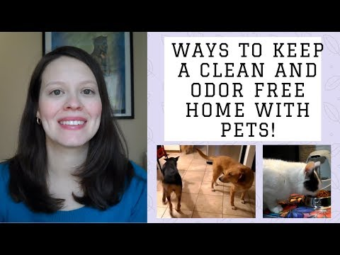 How to keep a clean and odor free home with pets | how to keep dog smell out of your house