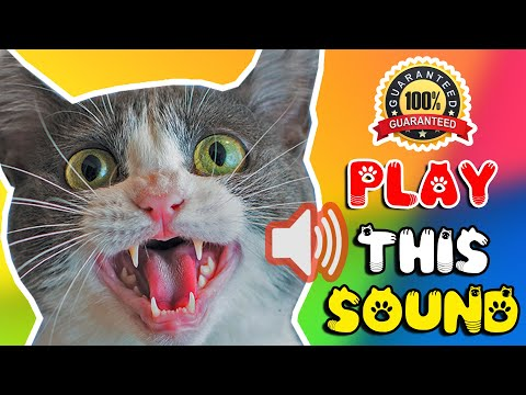 Cat sounds to scare mice away - rats will go away 🐁 cat sound effect