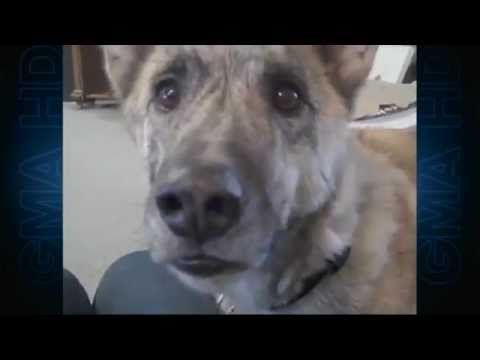 'ultimate dog tease' video becomes viral sensation (episode 1)   cute animals   abc news