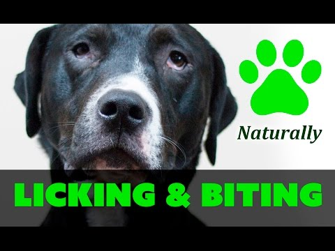 How to stop your dog from licking and biting paws naturally!
