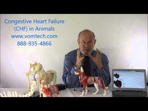 Information on congestive heart failure in animals