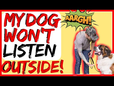 My dog ignores me / my dog ignores me when other dogs are around- dog training advice