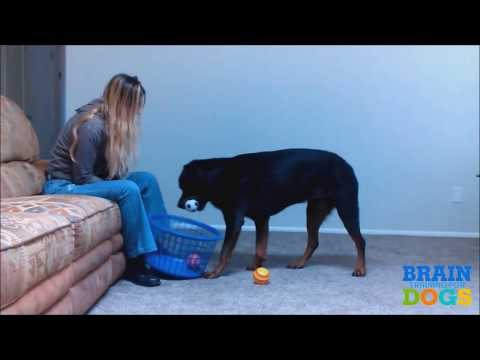 [dogs barking] how to train your dog to stop barking how to train your dog to stop barking at night