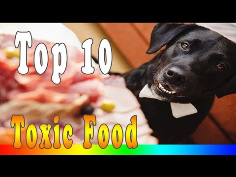 Foods dogs can't eat - 8 foods you should never feed your dog
