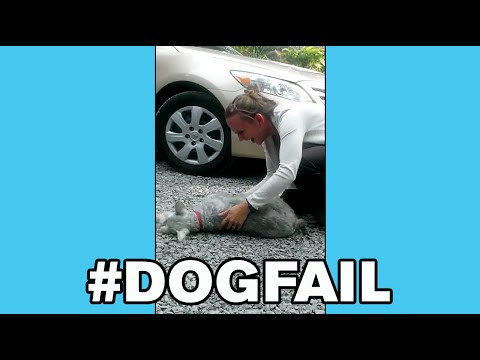 Dog gets so excited it passes out!   what's trending now