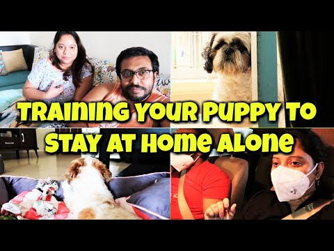 How to train your dog to stay alone   training your puppy to stay at home alone  shih tzu home alone
