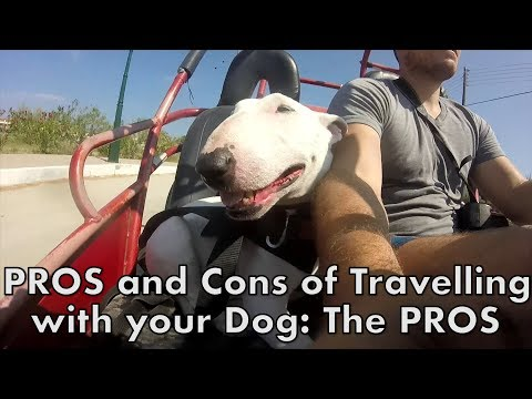 Pros and cons of traveling with your dog: the pros