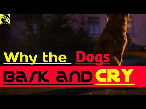 Why the dogs bark and cry at night | facts way