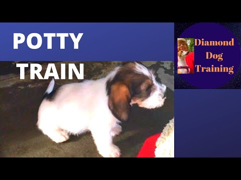 How to potty train a puppy to go outside fast