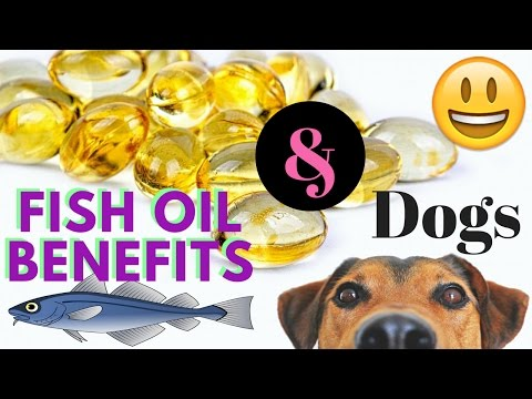 Fish oil benefits and dogs