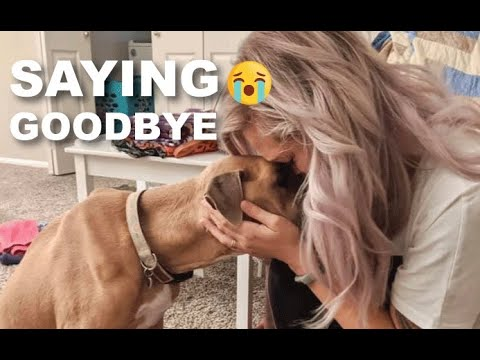 Putting our dog down - vlog wk 81