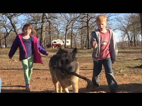 Are german shepherds good with kids?