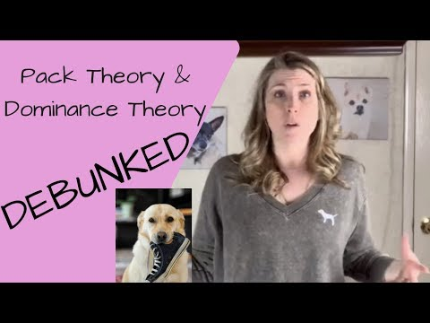 Pack theory and dominance theory in dog training force free dog training