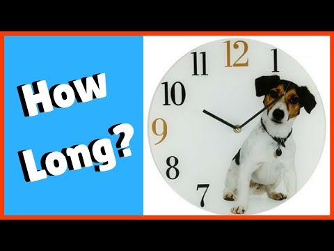 How long will it take to train my dog?