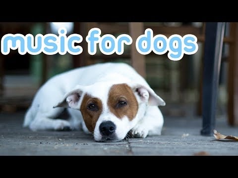 🚨this music will make your dog sleep instantly?! 🚨3 hour dog songs!