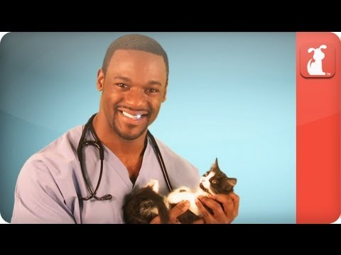 Hot vet - cats and vaccines