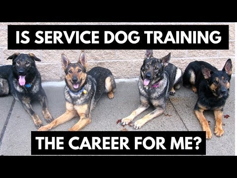 Is becoming a service dog trainer right for you?