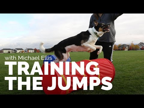 Training the jumps with michael ellis i trailer
