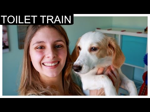 How to toilet train a puppy - to go outside
