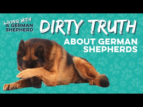 How to keep your house clean with a german shepherd | paw washer cup and mud daddy youtube review
