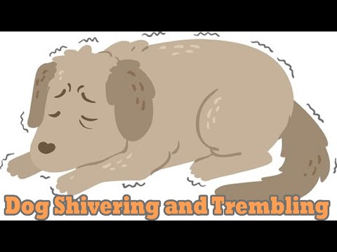 Dog shivering and trembling: causes and treatments