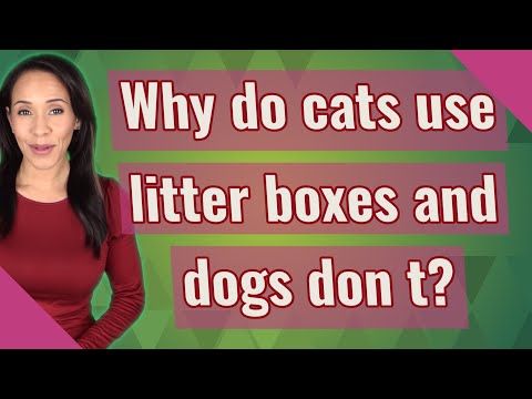 Why do cats use litter boxes and dogs don t?