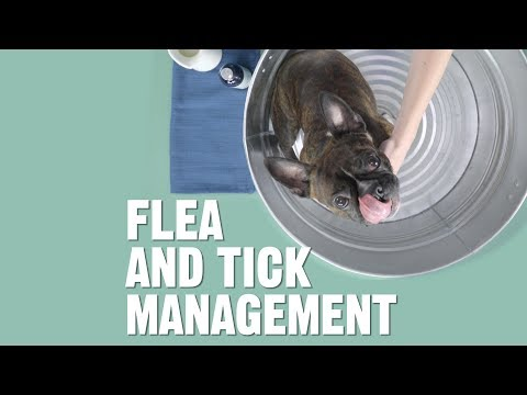 How do i get rid of fleas and ticks for dogs and cats? | chewy