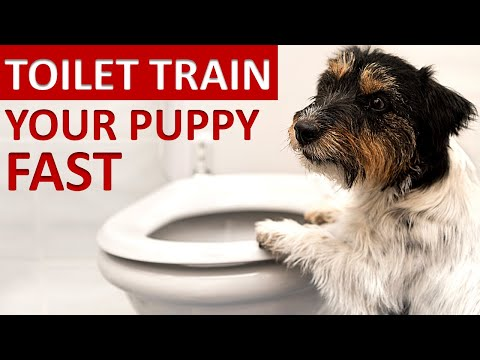 Dog toilet training - how to toilet train your puppy quickly 2020 (5 easy steps)