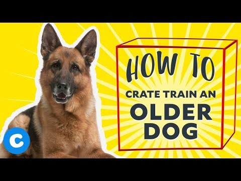 How to crate train an older dog | chewy