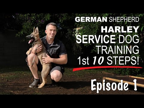 First 10 steps when training a service dog. episode 1