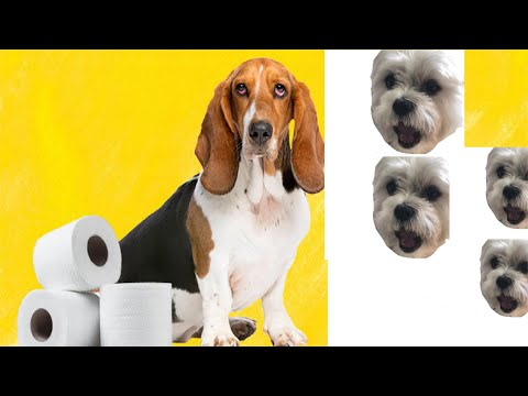 At-home treatment for acute diarrhea in dogs