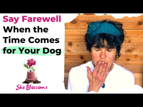 6 signs it's time to put your dog down – a veterinarian's advice