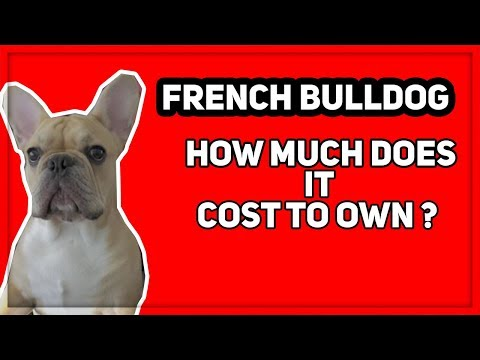 What does it cost to own a french bulldog ?