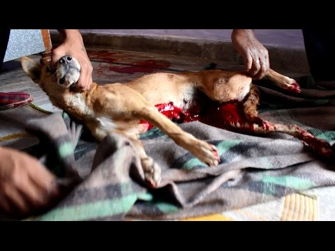 Dog bleeding to death saved just in time.