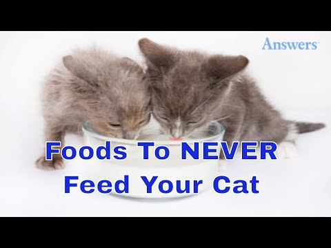 7 foods you should never feed your cat