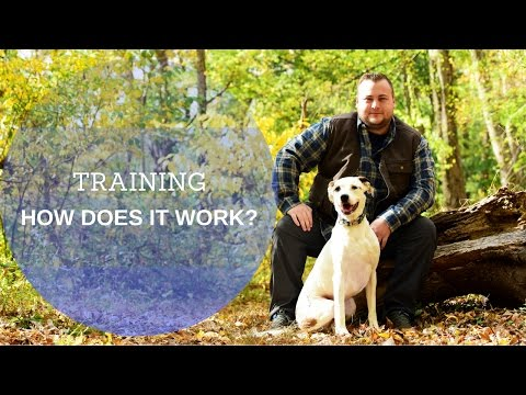 Training: how does it work with at attention dog training?