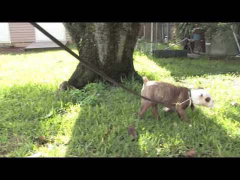 Dog training : how to train a puppy to go potty outside