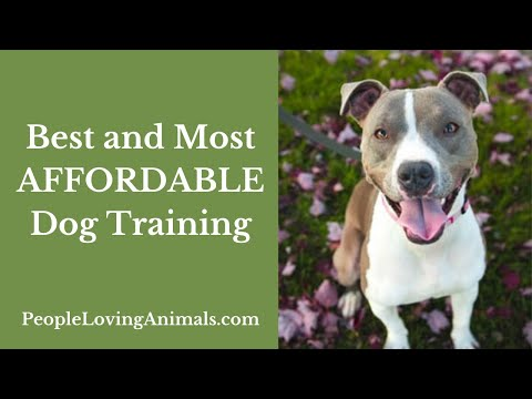 How much does dog training cost? [best and most affordable dog training]