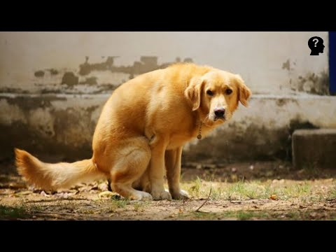This is why dogs spin around before they poop